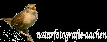 naturfotografie-aachen
